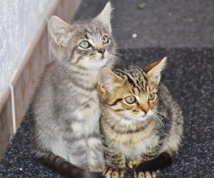 Two cats on the street